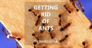 Help for getting rid of ants--or keeping them from being a problem to begin with.