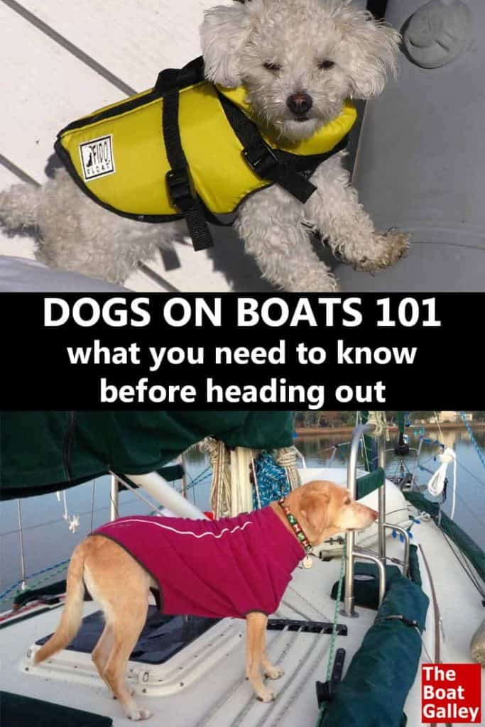 Thinking of cruising with a dog? Here's what you need to know before moving a dog onto your boat.