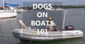 Dogs on boats: what you need to know to make your dog a great boat dog. Most dogs thrive on a boat! Learn how to keep them safe and happy.